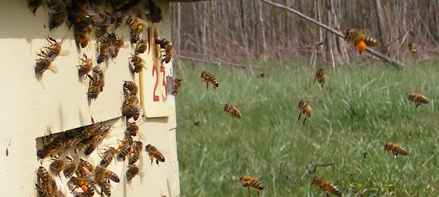 Canadian Honey Bee Queen Bee Breeder Reference Guide (2019)