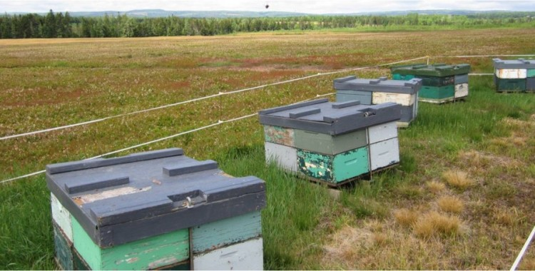 A Guide to Managing Bees for Crop Pollination