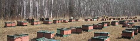 Annual Colony Loss Reports