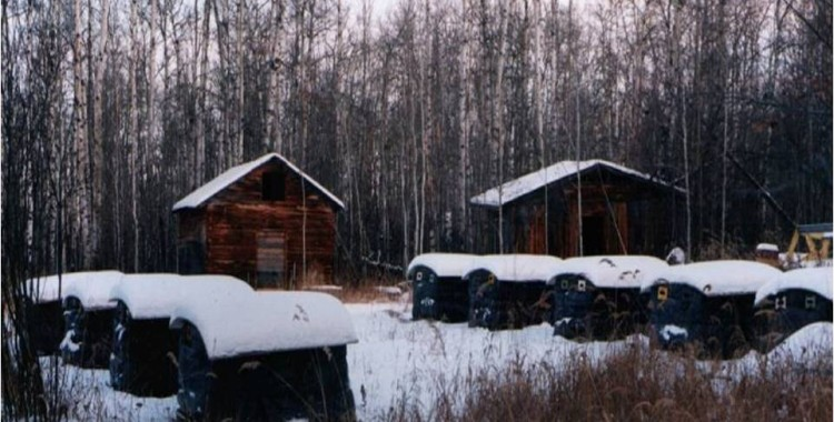 Wintering Hives